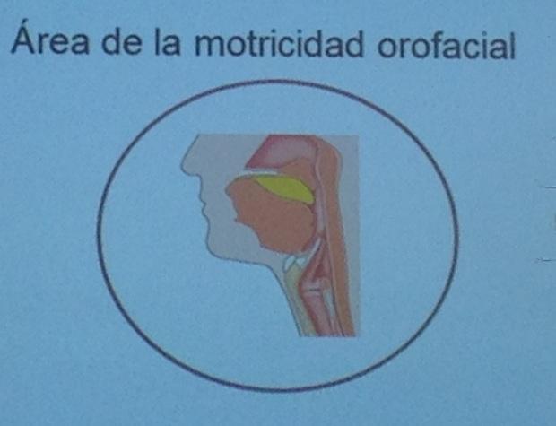 Area de motricidad orofacial